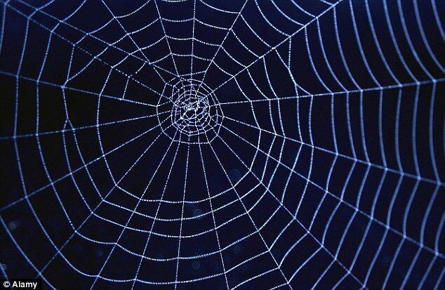 美公司研制高强度蜘蛛丝 或可用于防弹衣