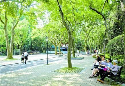 市民在中山公园浓密的树荫下休憩