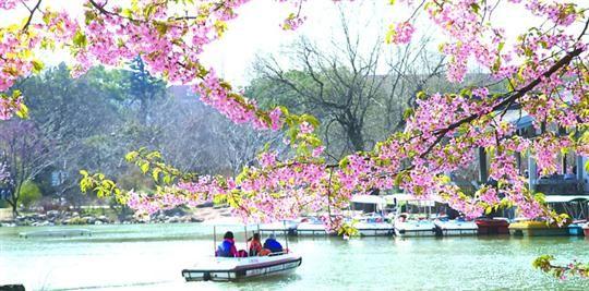 申城进入赏花季
