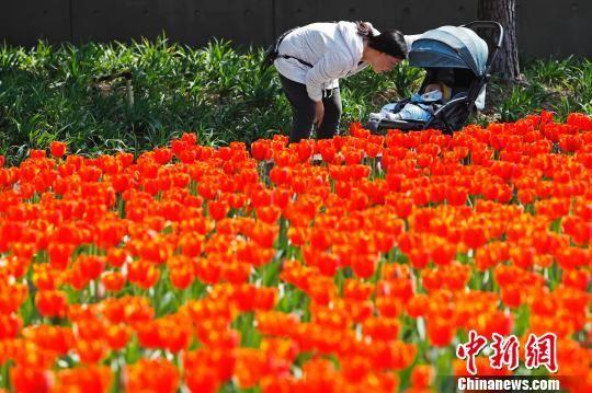 上海气温回升 民众公园踏春赏花
