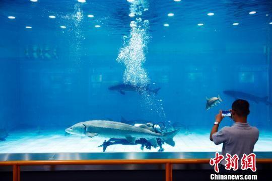 """探访上海长江口""""中华鲟之家"""""""