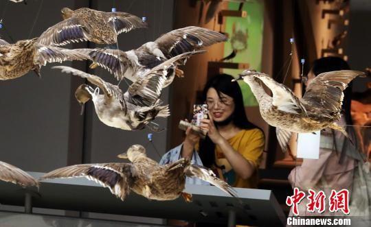 """上海市民夜游自然博物馆 开启""""寻鸟季"""""""